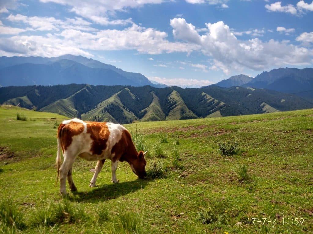 Nanshan Grassland Xinjiang