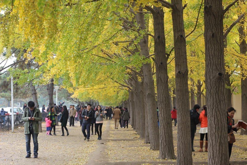 musim luruh di Beijing