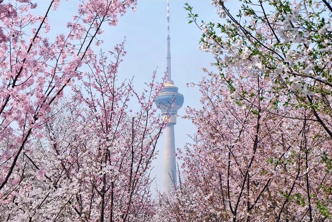 musim bunga di china